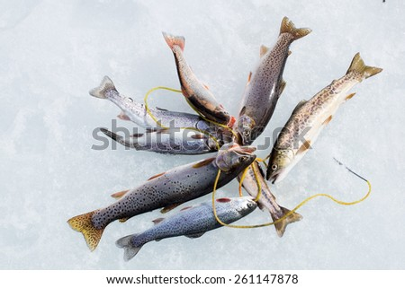 Fishing in winter: catch trout of different species on a rope - stock photo