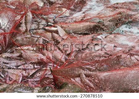 Fishing net catch in Uppuveli beach, Sri Lanka - stock photo