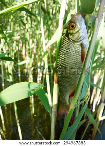 fishing on freshwater lakes in the reeds