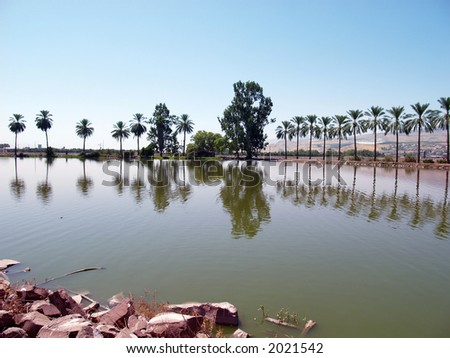 fishpond - stock photo