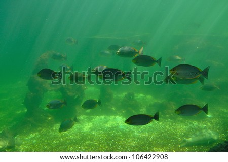 Fishs on green background - stock photo