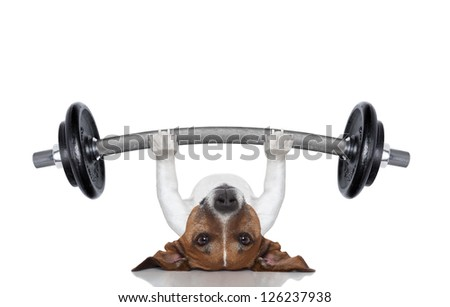fitness dog lifting a heavy big dumbbell - stock photo