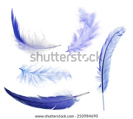 five blue feathers isolated on white background - stock photo