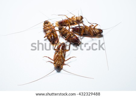 Five cockroaches - stock photo