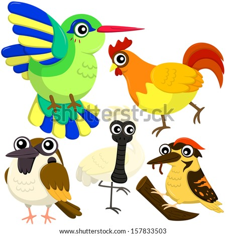 five colorful cute birds with white background