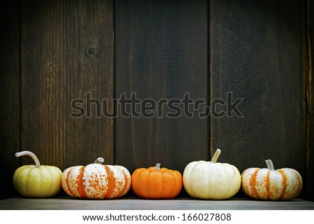 Five colorful pumpkins set against a moody old wood background, with room for your message