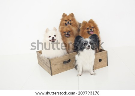 Five Dogs In The Box