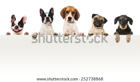 Five dogs looking over a wall - stock photo
