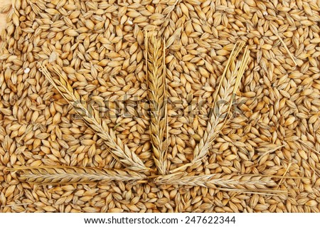 Five ears of wheat on wheat grains - stock photo