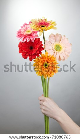 Five gerbera flowers on gray background