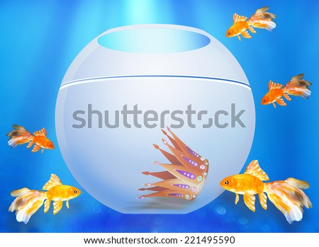 Five goldfishes look in an aquarium with a crown  - stock photo
