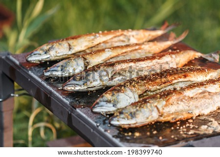 five grilled fish (mackerel) on the outdoor fireplace - stock photo