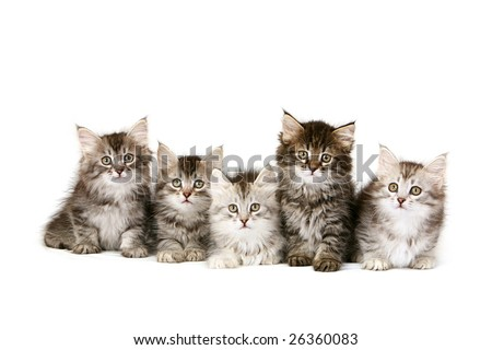 Five kittens sitting in a row