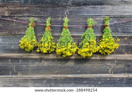 five midsummer bunch fresh medical herb St John's wort hang on old wooden barn wall - stock photo
