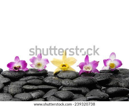 Five orchid on wet black stones - stock photo