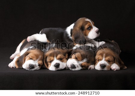 Five puppies sleeping