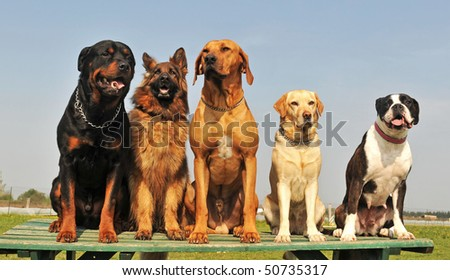 five purebred big dog sitting in a day of spring - stock photo
