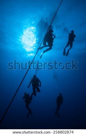 Five scuba divers exploring the deep blue/ Exploring the Deep Blue - stock photo