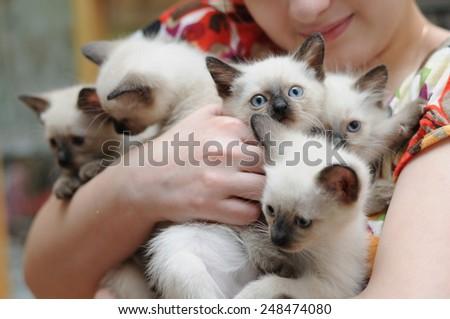 Five Thai kitten with blue eyes - stock photo