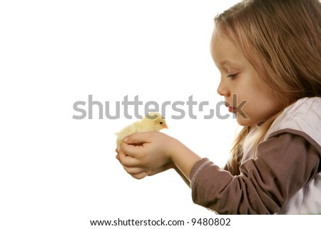 Five years old girl holding gently baby chicken (2 days old) on white background. - stock photo