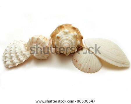 Fives seashells from Florida - stock photo
