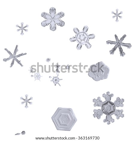 flakes, snow crystals, isolated macro set of real natural snowflakes on white background closeup - stock photo