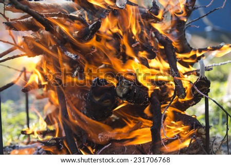Flame of burning firewood in the spring forest on a picnic - stock photo