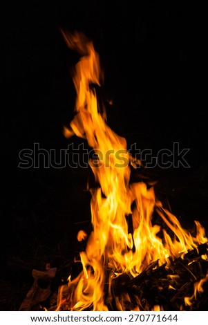 flames from a fire on a black background. picture - stock photo