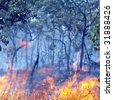 Flames of a bushfire in the Australian outback - focus on flames in foreground - stock photo