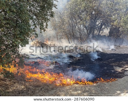 Flames of Fire in a summer field - stock photo