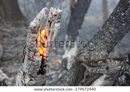 Flaming trunk in the burning forest - the natural disaster caused by an anthropogenous factor - stock photo