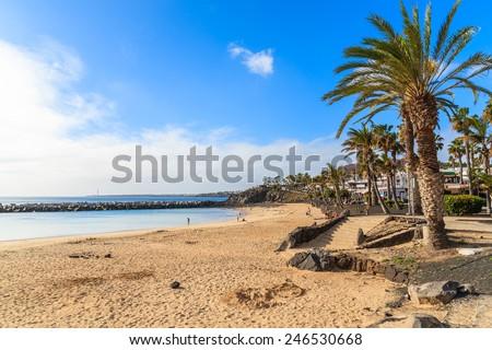 Flamingo beach with palm trees in Playa Blanca holiday village on coast of Lanzarote island, Spain  - stock photo