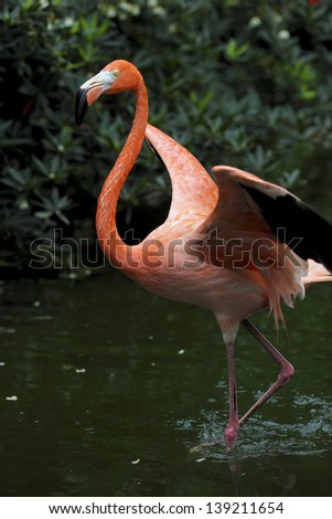 flamingo beat his wings