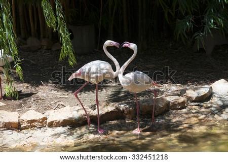 Flamingo creating heart shape - stock photo