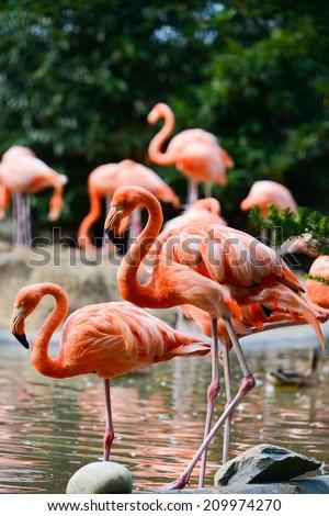 Flamingo family - stock photo