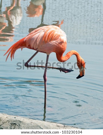 Flamingo in Moscow Zoo - stock photo