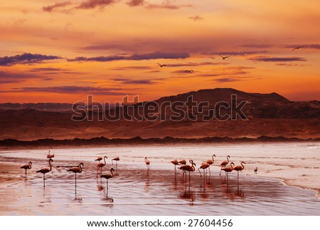 Flamingo on the beach, Atlantic coast of Namibia