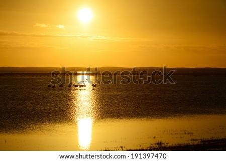 flamingos and sun - stock photo