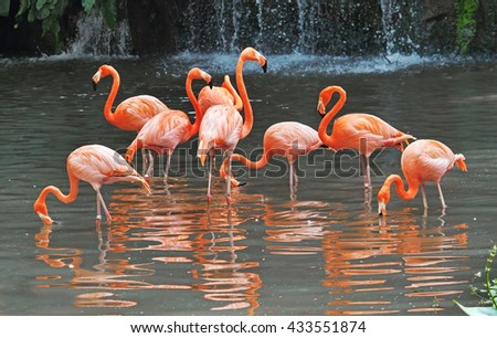Flamingos  are performing a dance at water. - stock photo