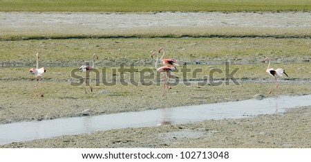 Flamingos during low tide - stock photo