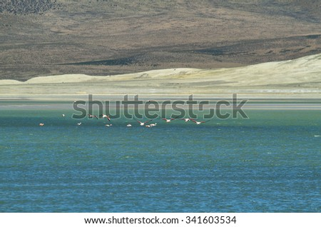 "Flamingos flying in ""Salar de Surire"", Chile - stock photo"