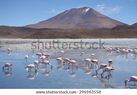 Flamingos in a beautiful Laguna Hedionda in Bolivia, Atacama desert, South America - stock photo