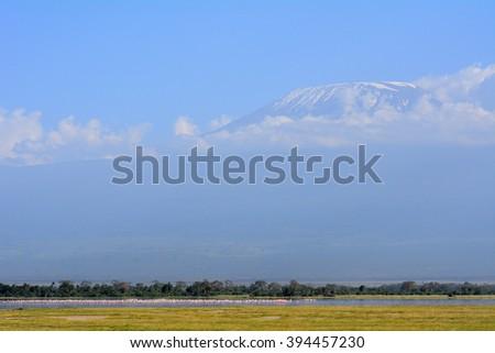 Flamingos in front of Kilimanjaro, Amboseli National Park, Kenya - stock photo