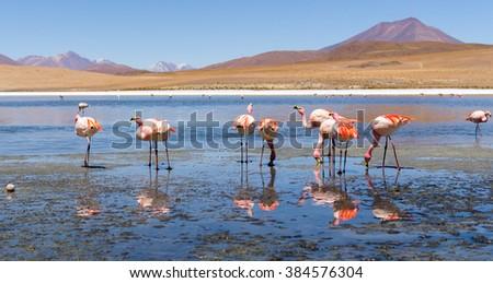 Flamingos in Lagoon, Green Lake,,Salar de Uyuni, Salt Flats in Bolivia - stock photo