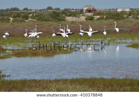 flamingos in the marshes of the guadalquivir