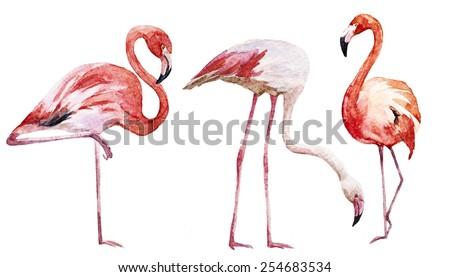 flamingos, watercolor, bird, drawing - stock photo