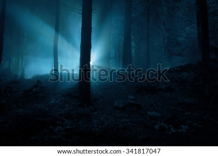 Flash in the night. Landscape. Mystery forrest.