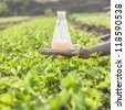 flask with soil solution in hand in the celery field - stock photo
