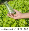 flask with soil solution in hand in the lettuce field - stock photo