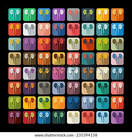 Flat design: kidneys - stock photo